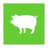 ACIDIFIER for Swine